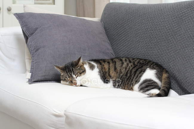 Fluffy cat sleeping on sofa at home — Stock Photo