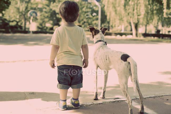 Вид сзади на маленького мальчика, гуляющего с собакой на улице — стоковое фото