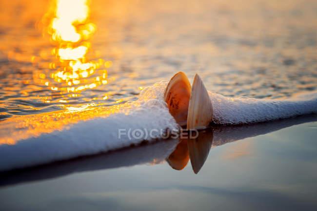 Vista del primo piano della shell in onda sulla spiaggia — Foto stock