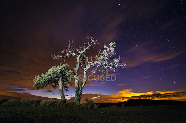 Majestic view of trees under starry sky — Stock Photo