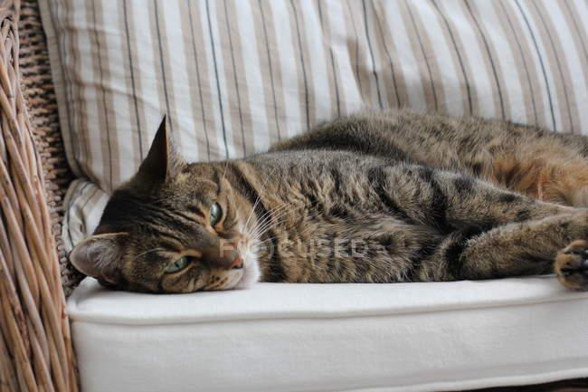 Nahaufnahme einer niedlichen Katze, die auf einem Stuhl liegt — Stockfoto