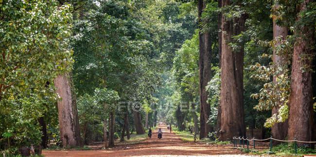 Cambodge, Angkor, Vue panoramique du parc avec de vieux arbres — Photo de stock