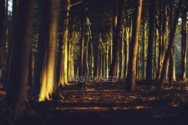 Majestuosa vista del primer sol en el bosque de otoño - foto de stock