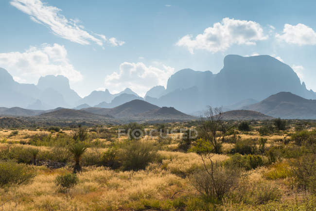 Vista panoramica del paesaggio del deserto, Parco nazionale di Big Bend, Texas, Usa — Foto stock