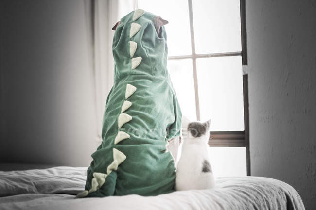 Back view of Shar pei in dinosaur costume and kitten looking through window — Stock Photo