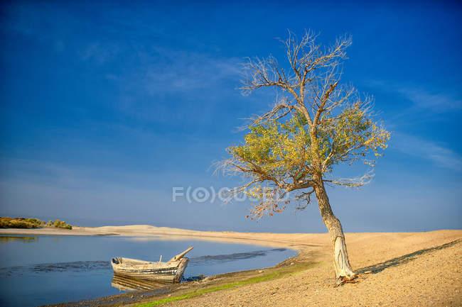 China, Xinjiang, Altay, río Irtysh, bote de remos y árbol solitario en la orilla del lago todavía - foto de stock