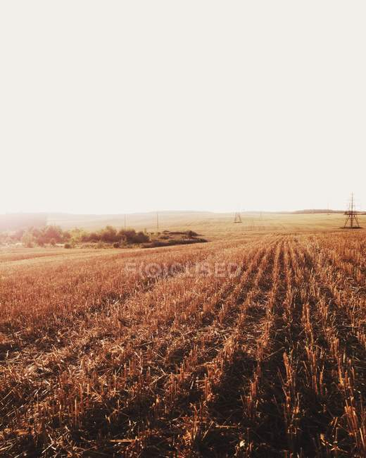 Scenic view of golden fields of crops — Stock Photo