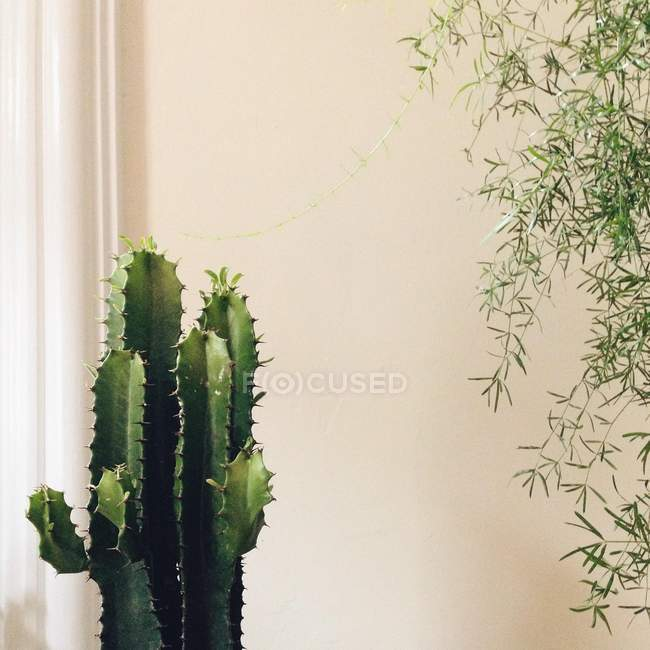 Closeup view of cactus and other plant growing indoors — Stockfoto