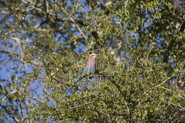 Coloridas aves sentado en las ramas de los árboles - foto de stock