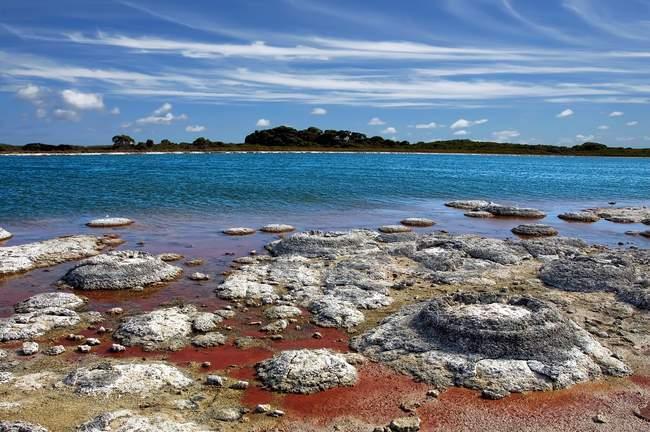 Vista panoramica delle stromatoliti nella piscina di hamelin, Australia, Australia Occidentale, Shark Bay, Riserva Naturale Marina — Foto stock