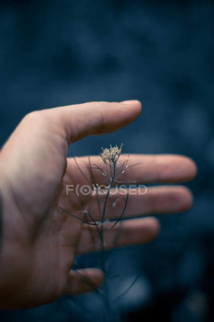 Imagem cortada de Man segurando planta contra fundo azul escuro — Fotografia de Stock