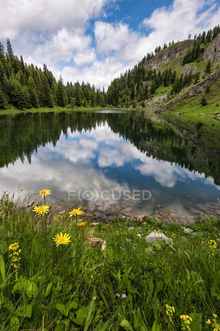 Живописный вид диких цветов, озеро с неба отражением в воде — стоковое фото