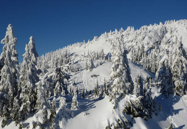 Canada, British Columbia, scenic view of Mt Seymour slopes — Stock Photo