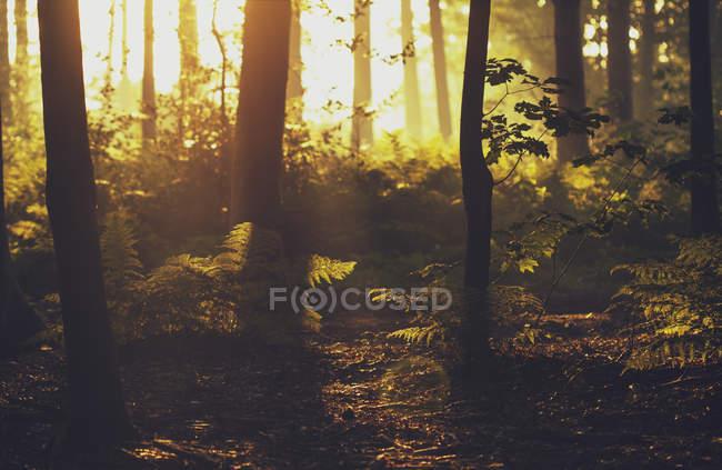 Vista panoramica della foresta alla luce del sole, Brugge, Belgio — Foto stock