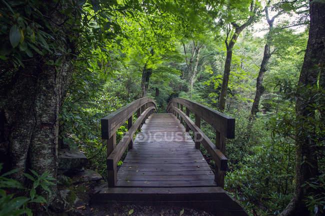Vue panoramique du pont en bois dans la forêt — Photo de stock