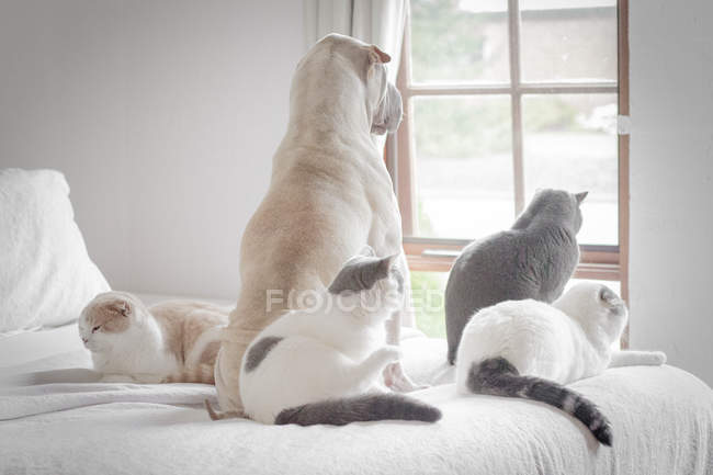 Back view of shar pei dog and four cute cats looking out of window — Stock Photo