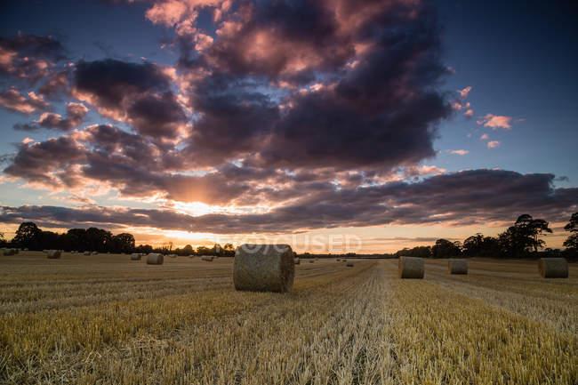 Irlande, Offaly, vue panoramique du champ avec des balles de foin pendant le coucher du soleil — Photo de stock