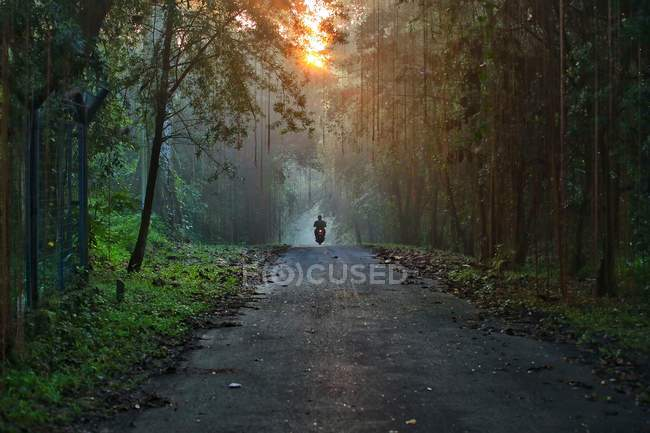 Man on motorbike on forest road at sunrise, Indonesia, Banten, Serpong — Stock Photo