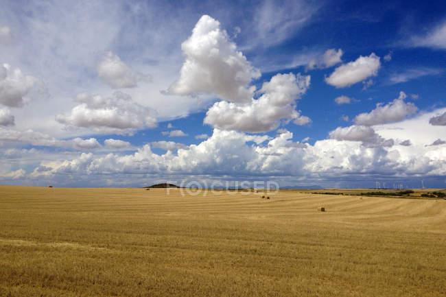 Malerischer Blick auf Weizenfeld und blauen Himmel mit Wolken — Stockfoto