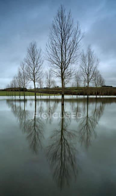 Vista panorámica de árboles desnudos altos reflejados en aguas tranquilas - foto de stock