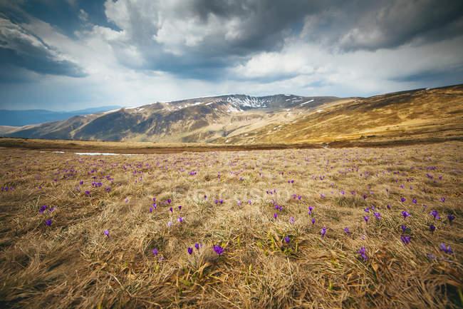 Живописный пейзаж с полем и дикие цветы — стоковое фото