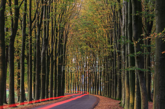 Holland, Gelderland, Light trails along treeline on country road — Stock Photo
