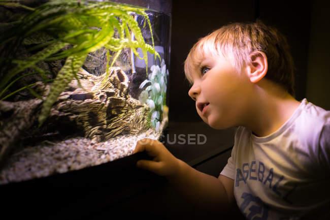 Porträt von neugieriger junge Blick durch Aquarium Glas — Stockfoto