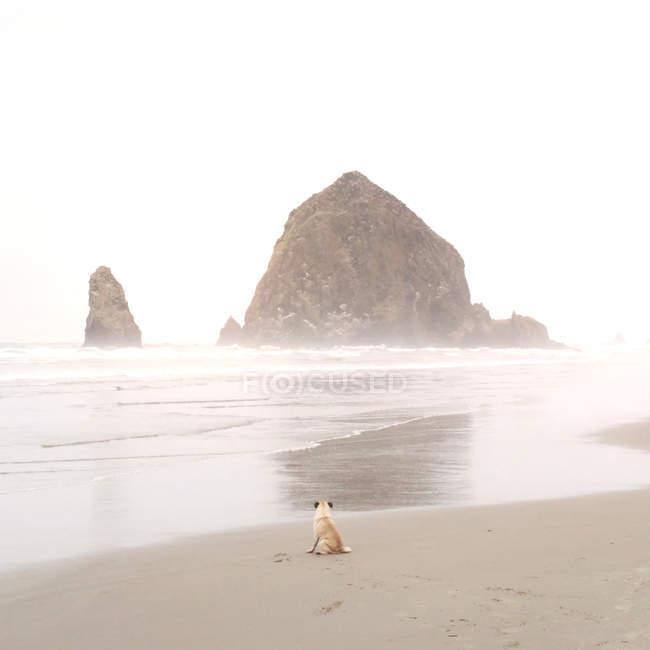 Vista posteriore del carlino seduto sulla spiaggia — Foto stock