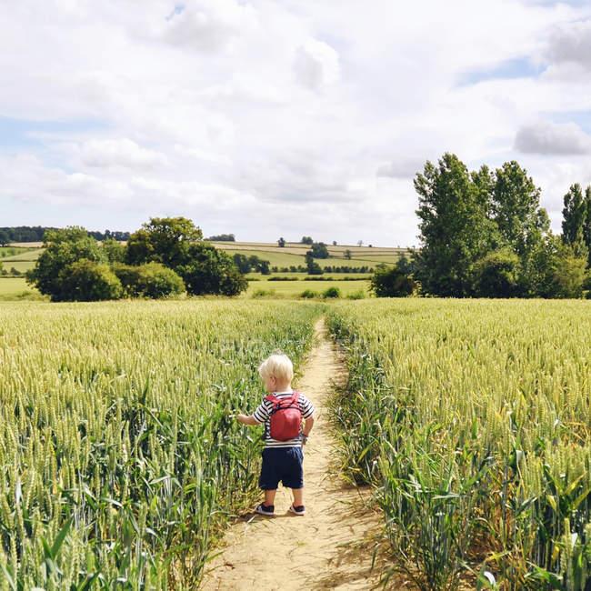 Menino colhendo trigo no caminho no campo — Fotografia de Stock