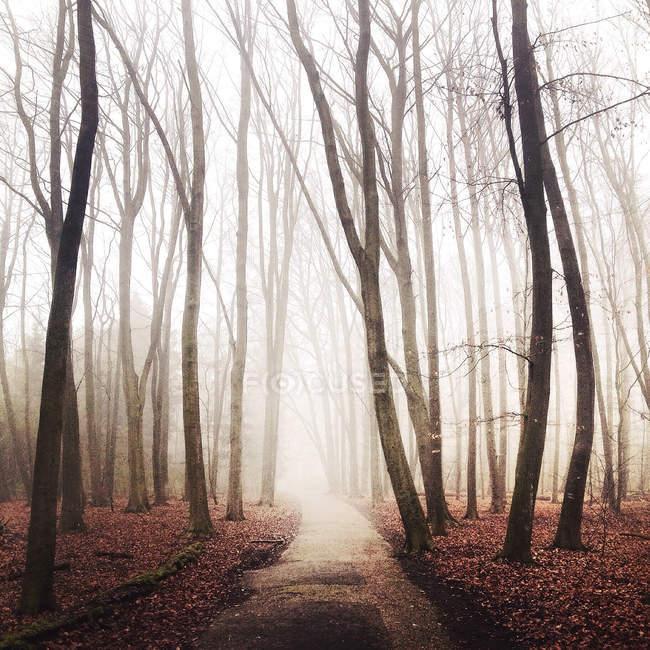 Malerischer Blick auf Fußweg, der in nebeligen, blätterlosen Wald führt, kralingse bos, Niederlande — Stockfoto