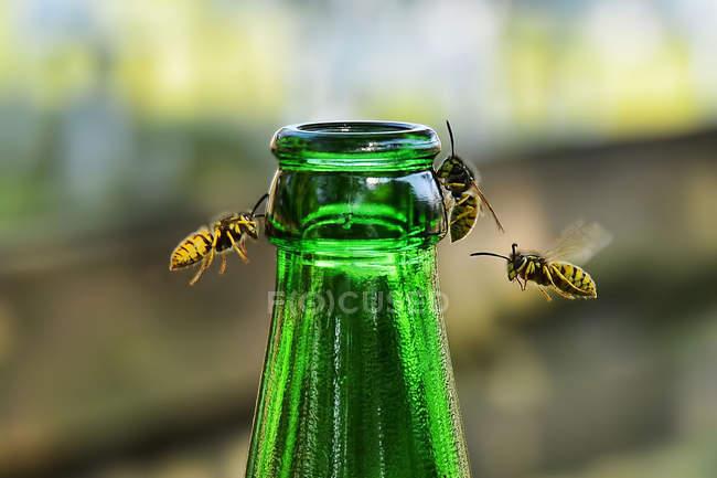 Vespe Battenti Intorno Verde Bottiglia Contro Sfondo Sfocato