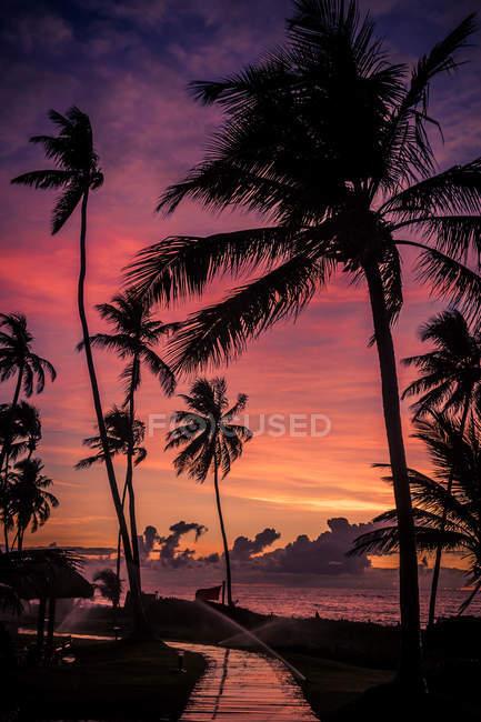 Violet beau coucher de soleil ciel et paumes — Photo de stock
