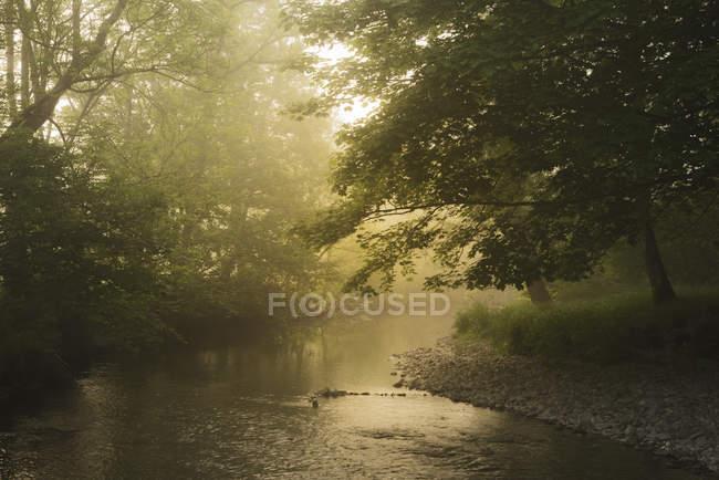 Fiume scorre nel parco con alberi — Foto stock