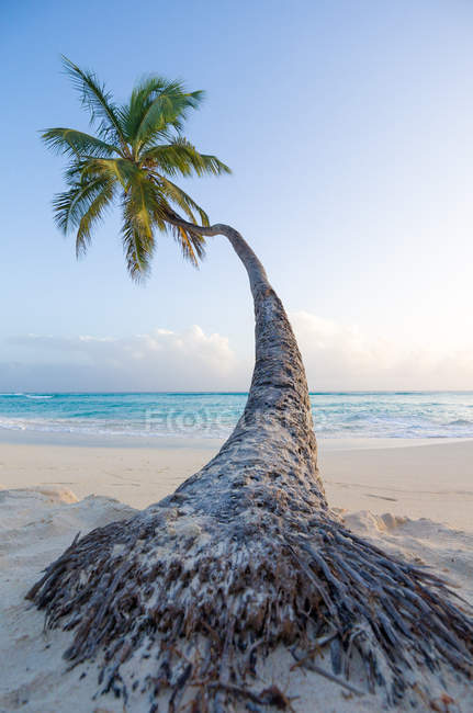 Tropical resort, sandy beach, palm tree and sea — Stock Photo
