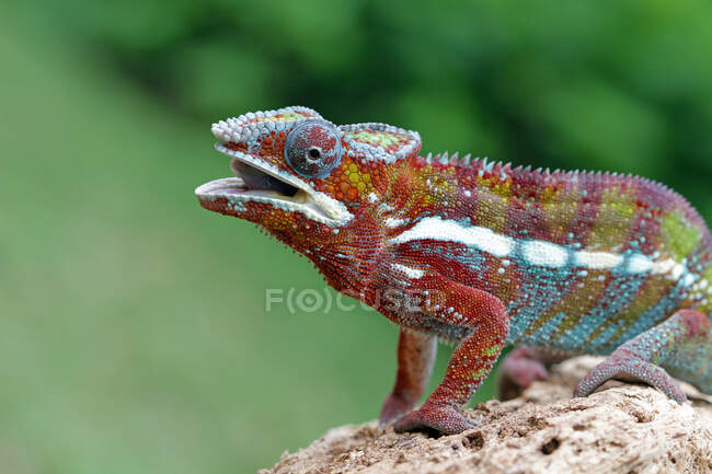 Close up of a lizard sitting on the rock — Stock Photo