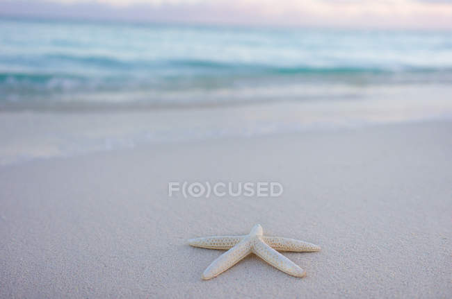 Sea water, sandy beach and starfish — Stock Photo