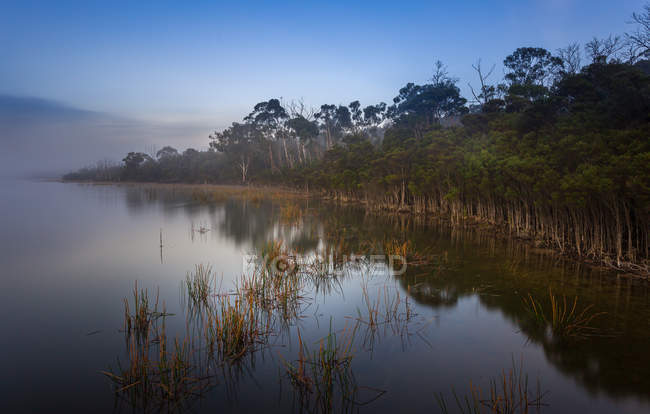Scenic view of gum trees at misty lake — Stock Photo