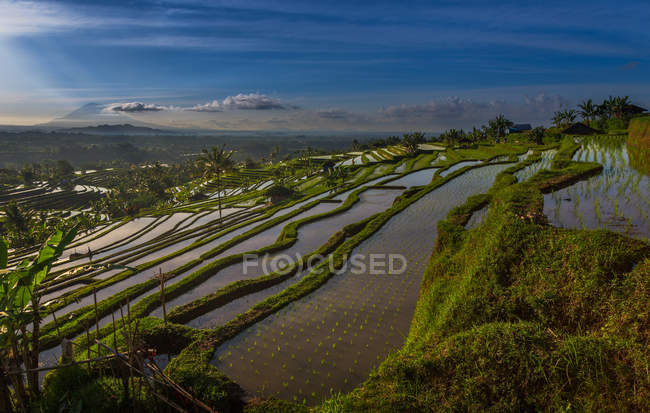 Scenic view of beautiful green rice terrace during sunset, Vietnam — Fotografia de Stock