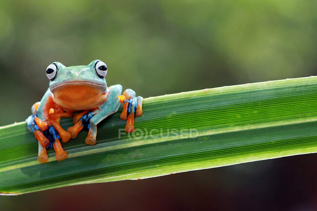 Close-up shot of adorable little tropical frog in natural habitat — Stock Photo
