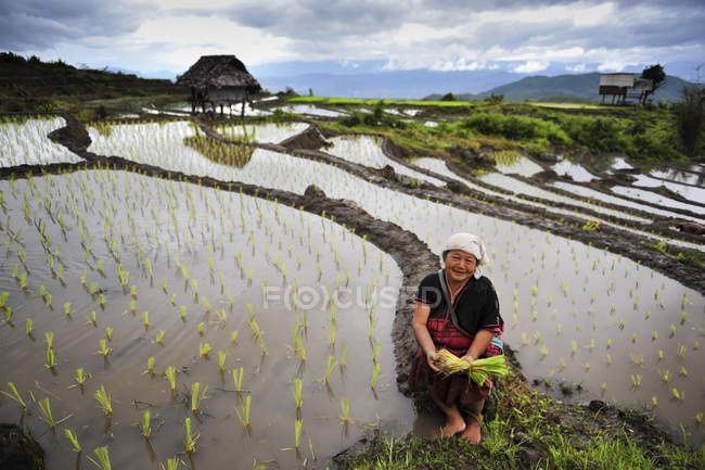 Scenic view of beautiful green rice terrace during sunset, Vietnam — Stock Photo