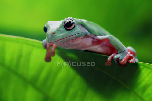 Primer plano de adorable rana tropical en hábitat natural - foto de stock