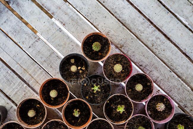 Vista aérea de las plantas de cactus en macetas - foto de stock