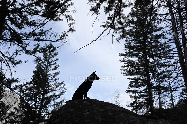 Silhouette of a dog sitting on a rock, scenic view — Stock Photo
