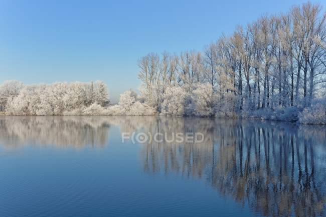 Vista panoramica degli alberi coperti di gelo riflessa in un lago, Tergast, Bassa Sassonia, Germania — Foto stock