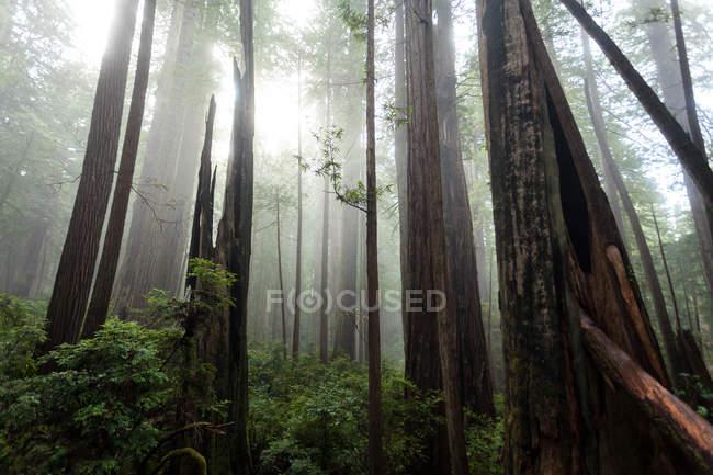 Живописный вид на парк штата Иллинойс Крик Редвудс, Калифорния, США — стоковое фото