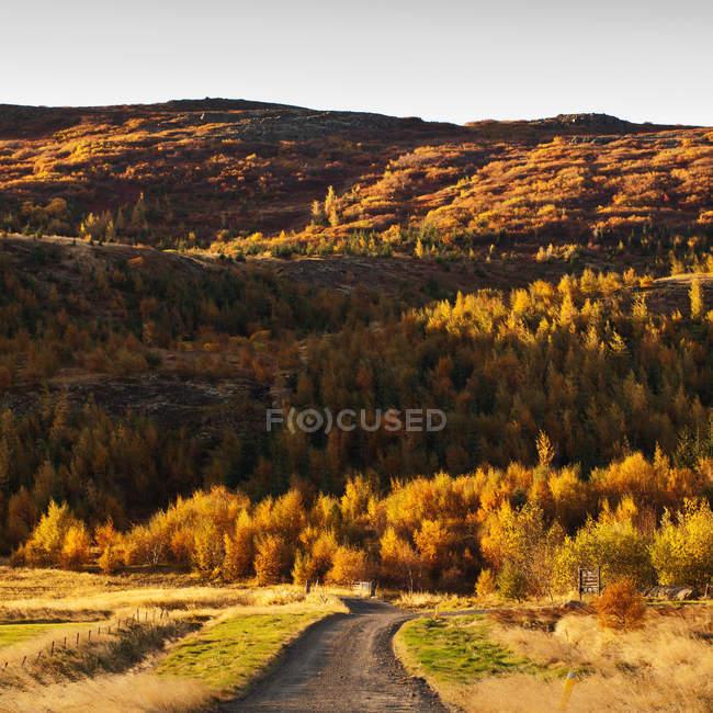 Road through autumn landscape, Iceland — Stock Photo