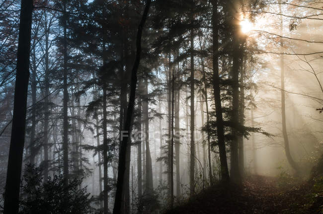 Scenic view of foggy forest, Heiden, Appenzell, Switzerland — Stock Photo