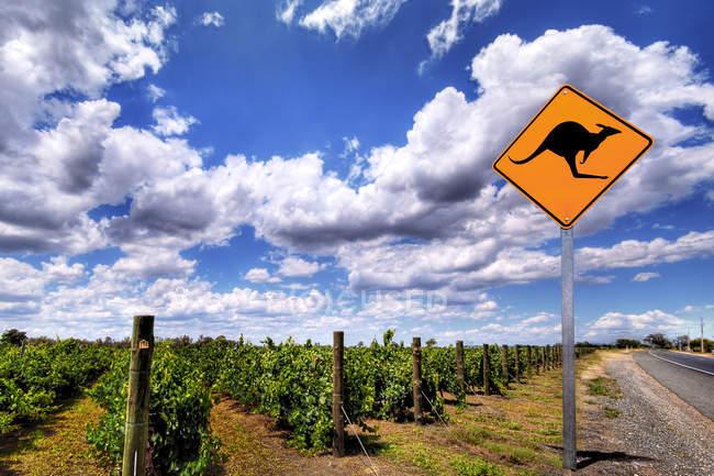 Scenic view of Kangaroo Warning Sign, vineyard and road, South Australia, Australia — Stock Photo
