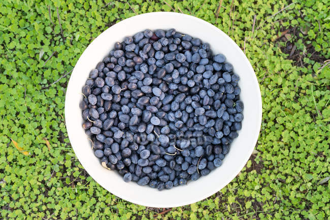 Bowl of freshly picked organic black olives, top view — Stock Photo