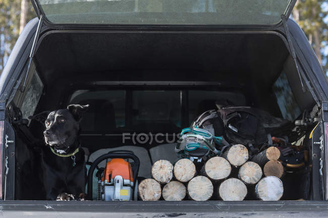 Dog lying in back of truck with fire wood — Stock Photo